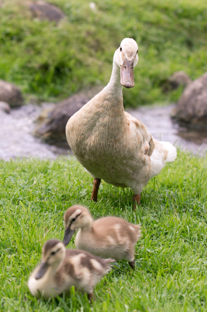 Mother Goose?